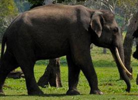 Elephant Safari Tour In Chiang Mai